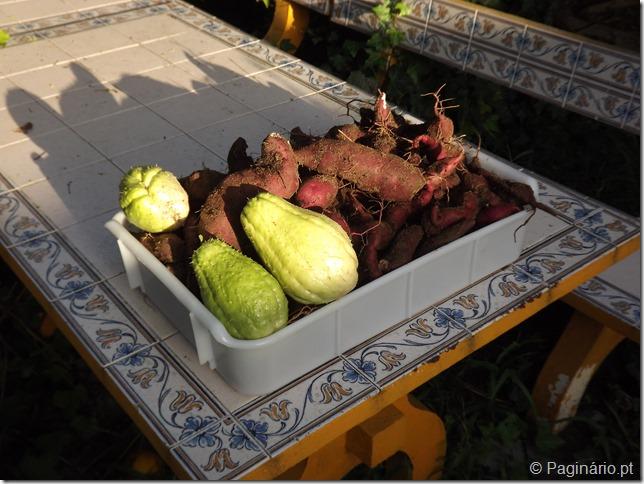 Caixa cheia com uma colheita de batata doce e chuchus