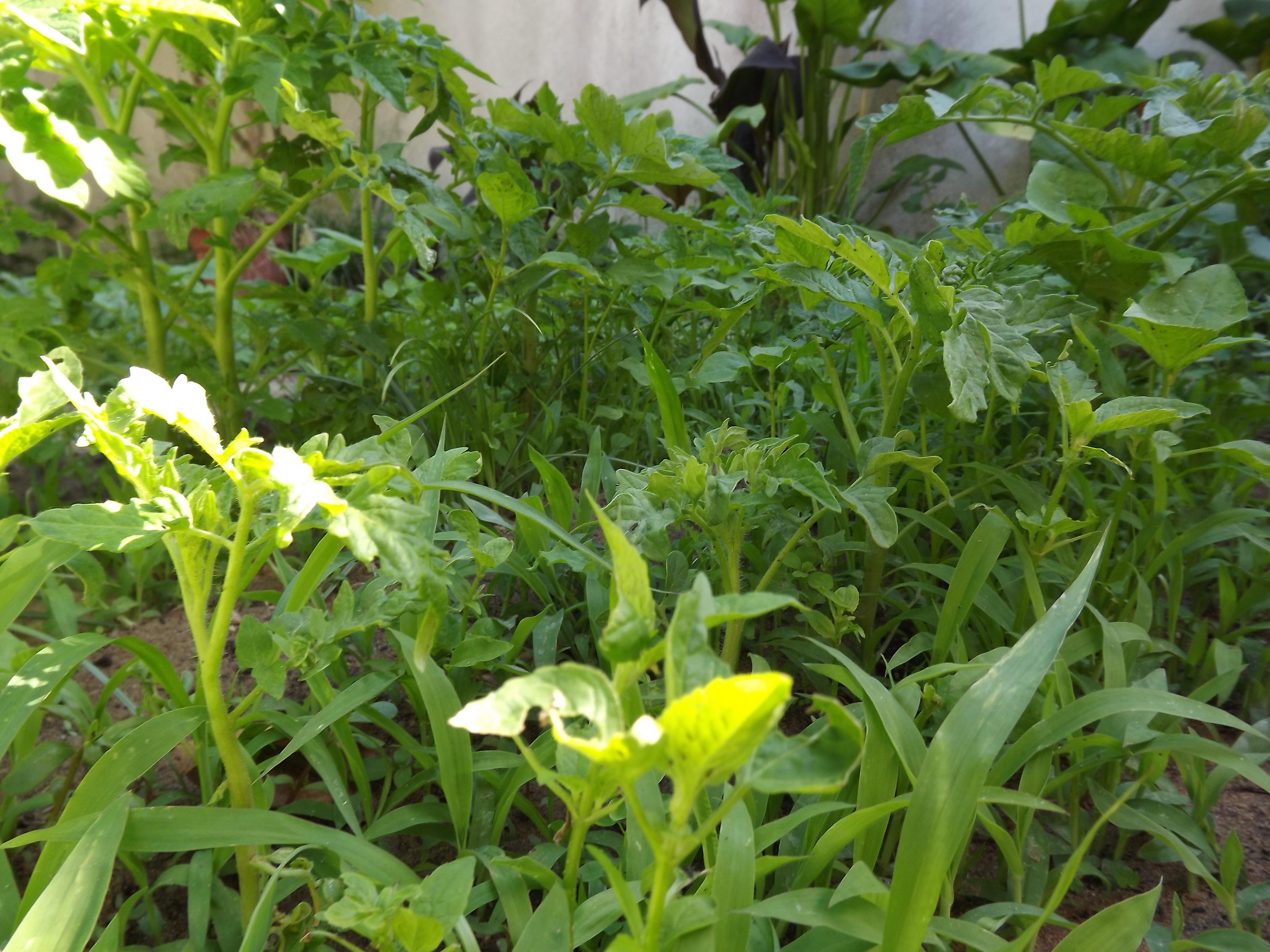 Horta Primavera/Verão 2013